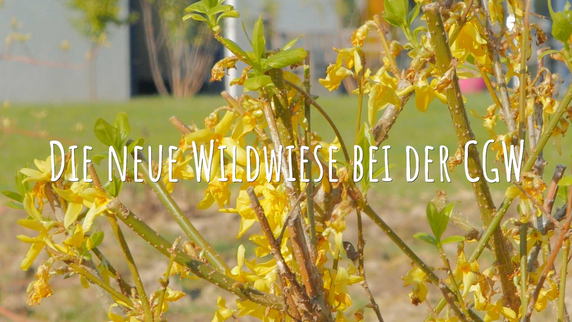 Die Bienenwiese bei der CGW